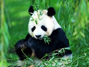 nesli-tukenen-buyuk-panda